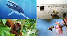 Weird facts about well-known animals