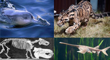 Extinct Animals That We Are Sad To See Gone