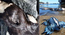 Mysterious Creatures That Washed Up From The Ocean