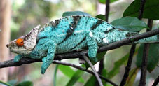 Cool Chameleon Facts You'll Want To Know