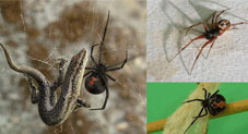 Most Venomous Spiders That Actually Exist